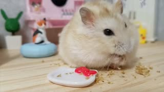 Hamster chills out in his cute tiny bedroom