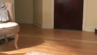 Black kitten plays fetch with small red ball