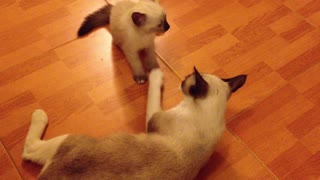 A Kitten Plays With Its Mother Cat #cute