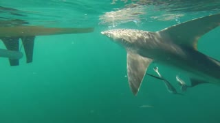 Fishermen Have Close Encounter With A Shark Off The Florida Coast  - Video