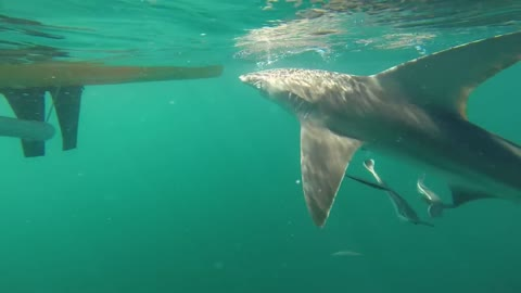 Up-close encounter with shark off Florida coast