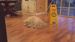 Dog and mop merge into one - Video