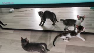 Kittens see themselves in the mirror for the first time