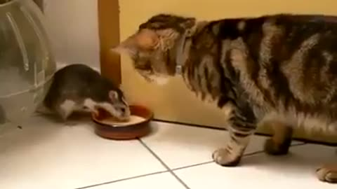Tom and Jerry fight