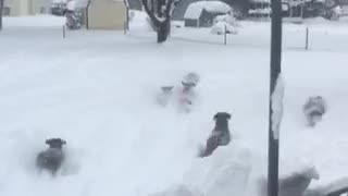 Dogs Love Playing in Snow - Video