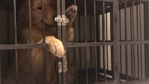 This Pup Shows She Is Quite The Escape Artist