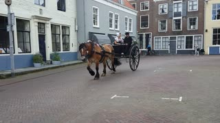 Dutch familiy ridding their horse on the streets of Middelburg