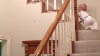 Triplets Unhappily Climbing Stairs