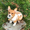 Luna_The_Corgi