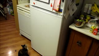 Two-Faced Kitten Doesn't Like Fridge Magnets!