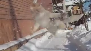 Cat Snow Ninja - Video