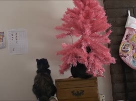 Kitten Accidentally Knocks Over Christmas Tree? - Video