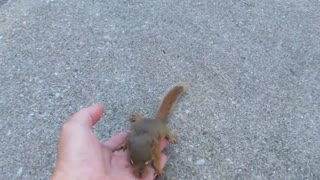 Baby Squirrel lost her mother befriends People - Video