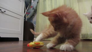 Toy   for  kittens - Video