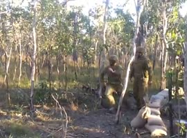 Soldiers Try to Knock Trees Down