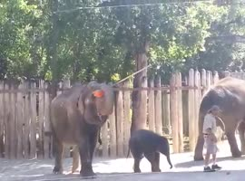 Elephant after bath - Video