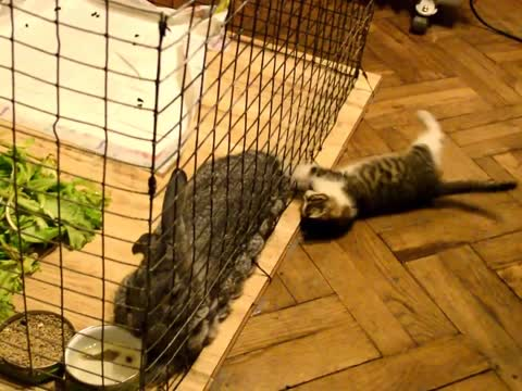 Adorable Kitten Tests Bunny's Patience