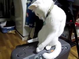 cat opens the lid - Video