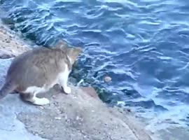 Cat fishing with good luck! - Video