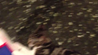 Cute Kitten Loves to Go For Mop Ride! - Video