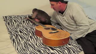 Monkey Gets a Guitar Lesson - Video