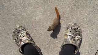 Baby squirrel befriends man ... - Video
