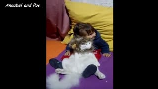 Adorable Cat Relaxes Wearing Lion Costume - Video