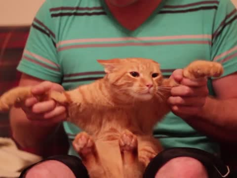 Awesome Dubstep Cat