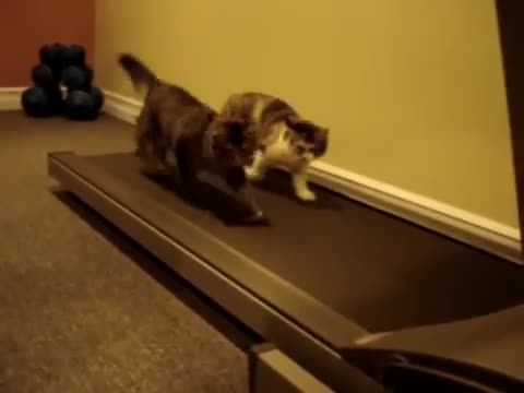 Two Kittens On A Treadmill