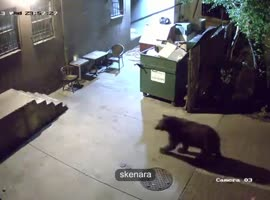 bear steals - Video