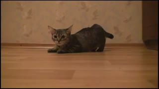 cat cat funny - Video