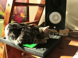 Cat DJ Creates a Song - Video