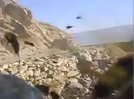 Pissed off wasps after explosion