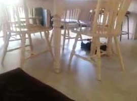 crazy Cat Plays on Chair