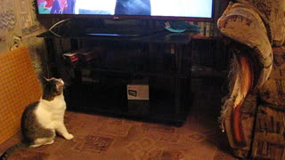 Musya the Cat Tries to Catch Lugers on TV - Video