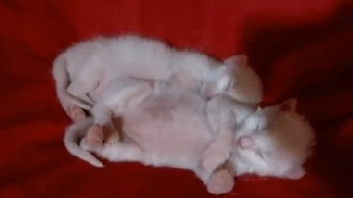 These Sleeping Kittens Will Melt Your Heart!