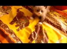 THE CUTEST KITTEN EVER - Video