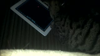 Curious Cat Plays on Owner's iPad