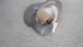dog and cat - cute fight