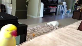 Parrot Competes With Dog For Owner's Lunch - Video