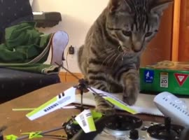 Cat Defeated By Helicopter Toy