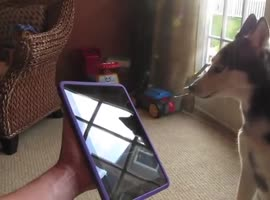 COOL DOG SONG ( IPAD ) - Video