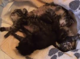 Sleepy cute little Kittens - Video