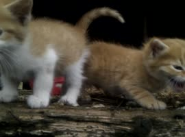 cute kittens - Video