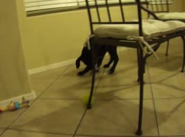 Cute Puppy Battles Ice Cube!