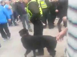 -Police Dog vs. Police Man- - Video