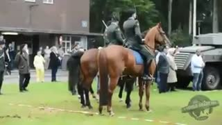 Horse Decides He's Had Enough During Veterans... - Video