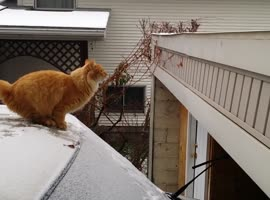 Cat Fails Jumping off a Snow-Covered Car - Video