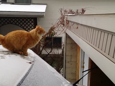 Cat Fails Jumping off a Snow-Covered Car