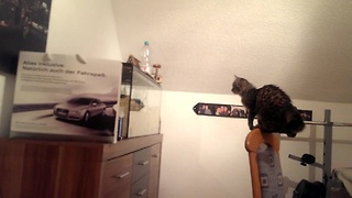 Cat Attempts Sneaky Attack, Embarrasses Herself - Video